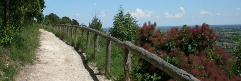 Sentiero del M. Calbarina e M. Piccolo n.7