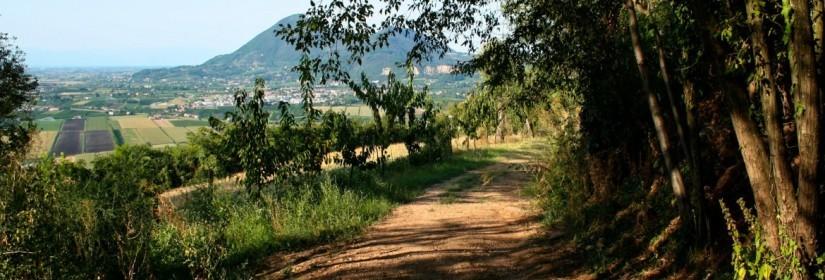 Sentiero del Monte Lozzo n.5