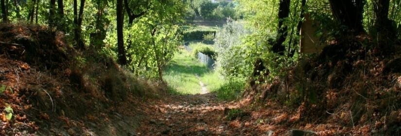 Sentiero del Monte Gallo, delle Grotte e delle Basse n.10