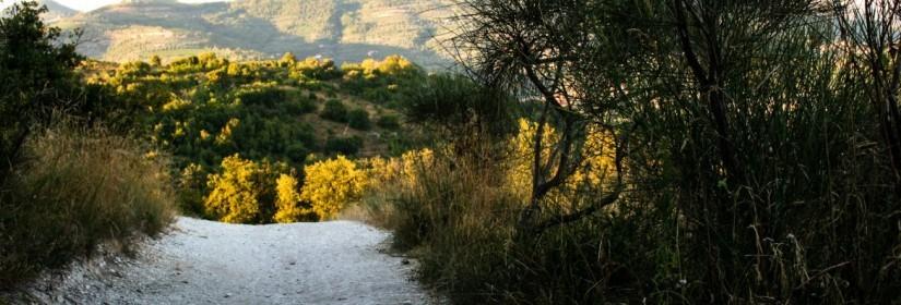 Sentiero del Monte Cecilia n.8